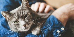 Preventative Care for Cats - Cornelius Veterinary Clinic