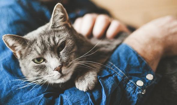 Preventative Care for Cats - Cornelius Veterinary Clinic