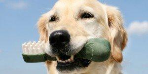Dental Care - Cornelius Veterinary Clinic