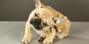 Dermatology - Cornelius Veterinary Clinic
