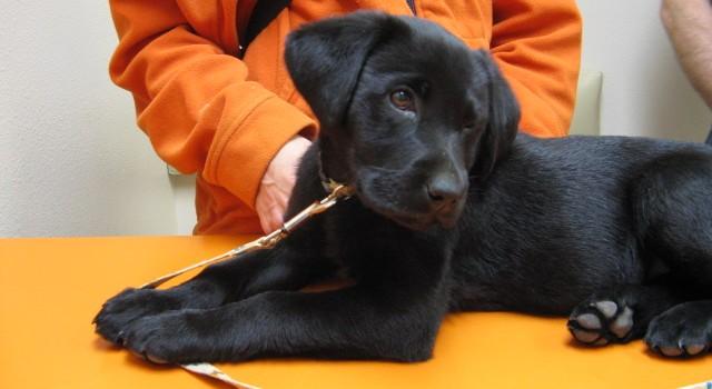 Preventative Care for Dogs - Cornelius Veterinary Clinic